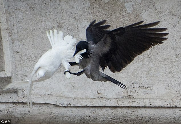 Raven attacks dove at the Vatican